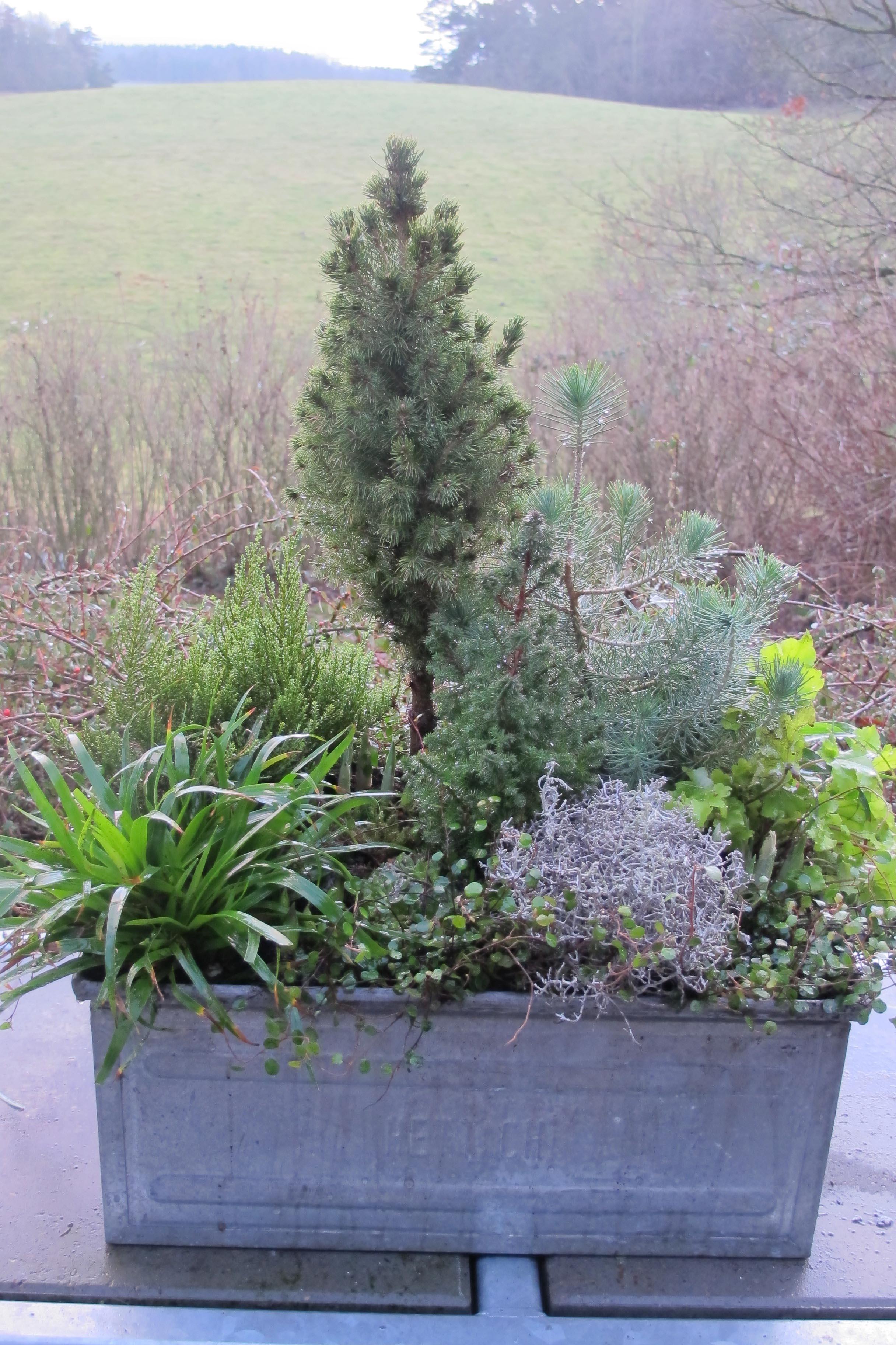 planter til vinterkrukker