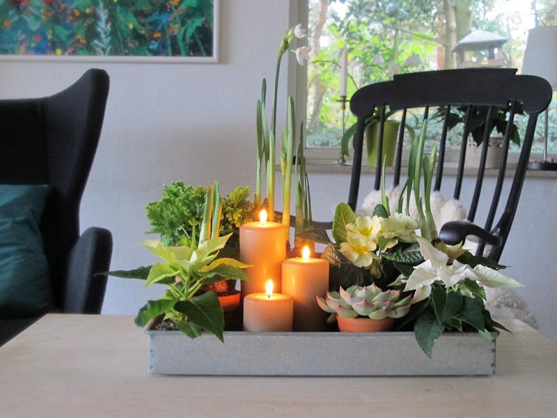Potteplante stilleben-1