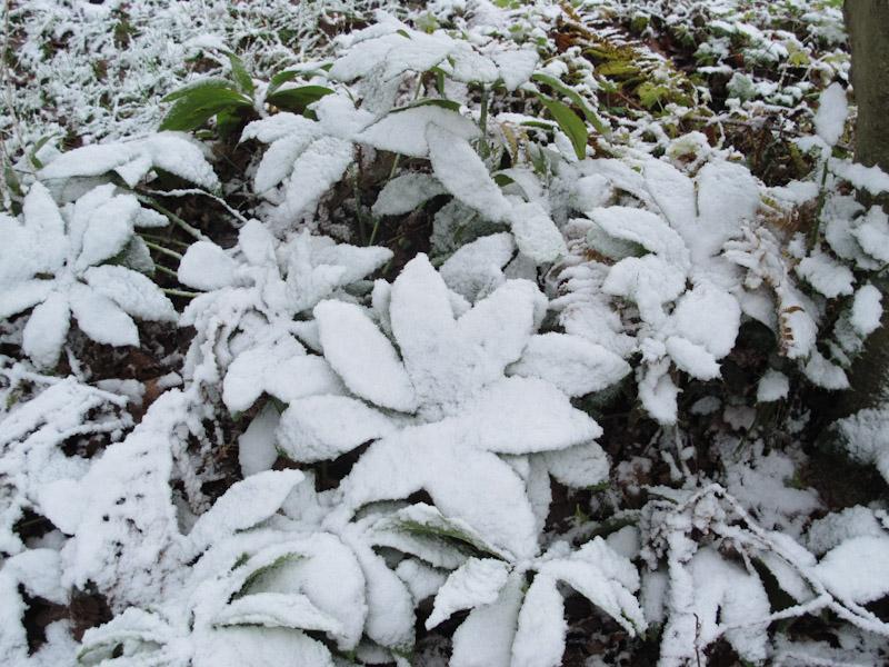 Vinter haven 14-1
