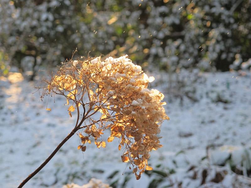 Vinter haven 14-11