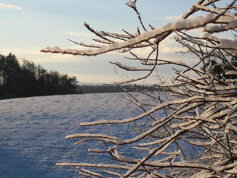 Vinter haven 14-12