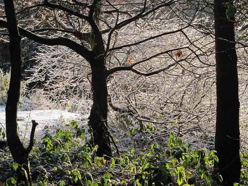 Vinter haven 14-13