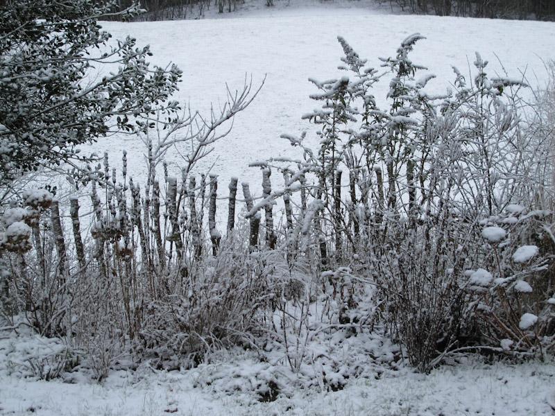 Vinter haven 14-2-1