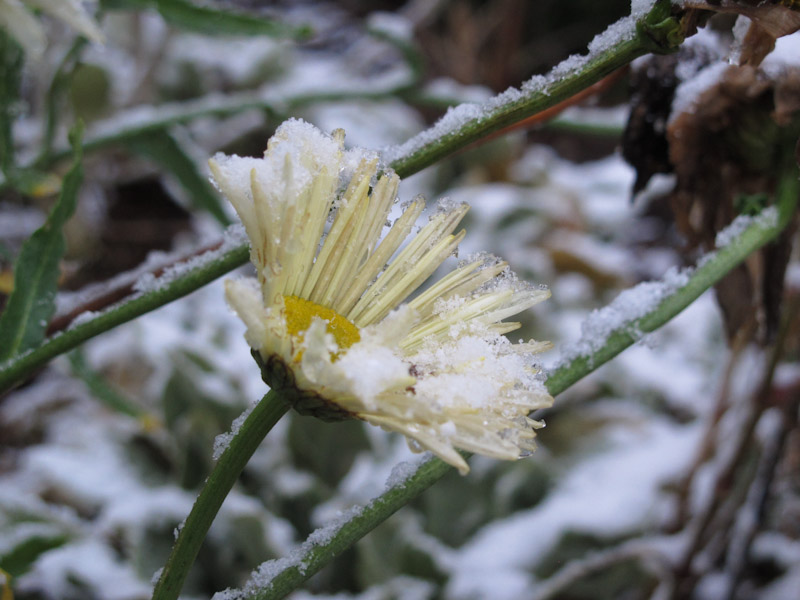 Vinter haven 14-4-1