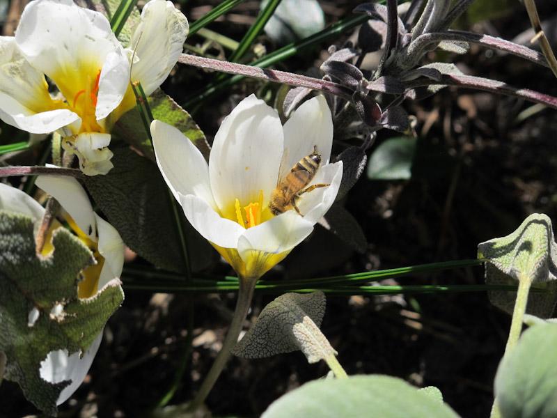 Bi i marts-1
