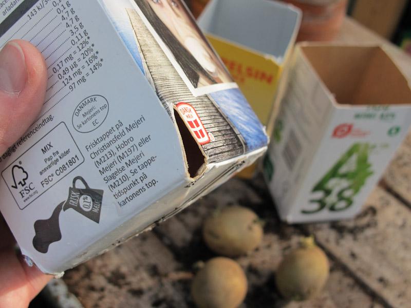 Solanum tuberosum forspiring-16