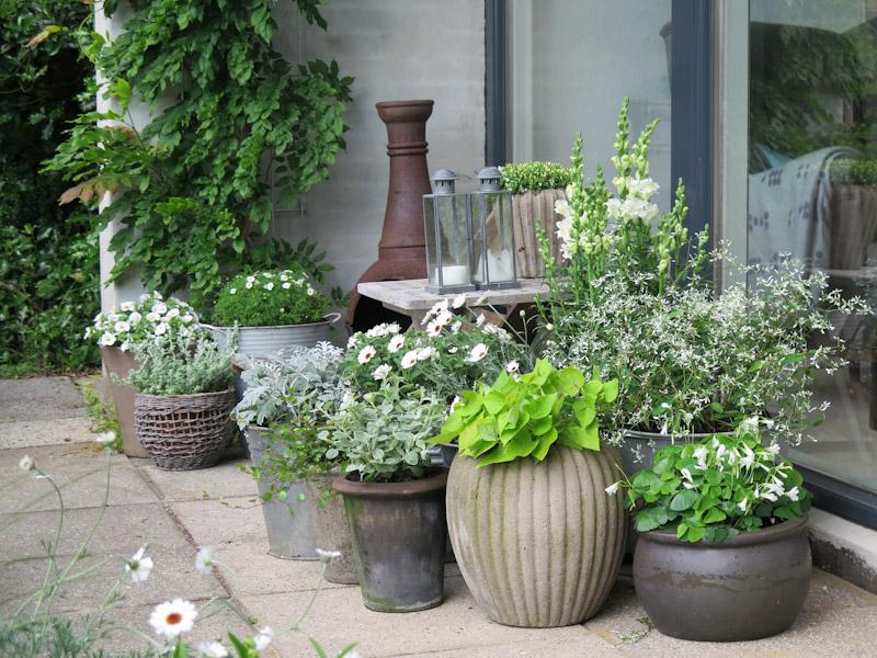 MÃ¥neskinskrukker til terrassen   helt hen i haven