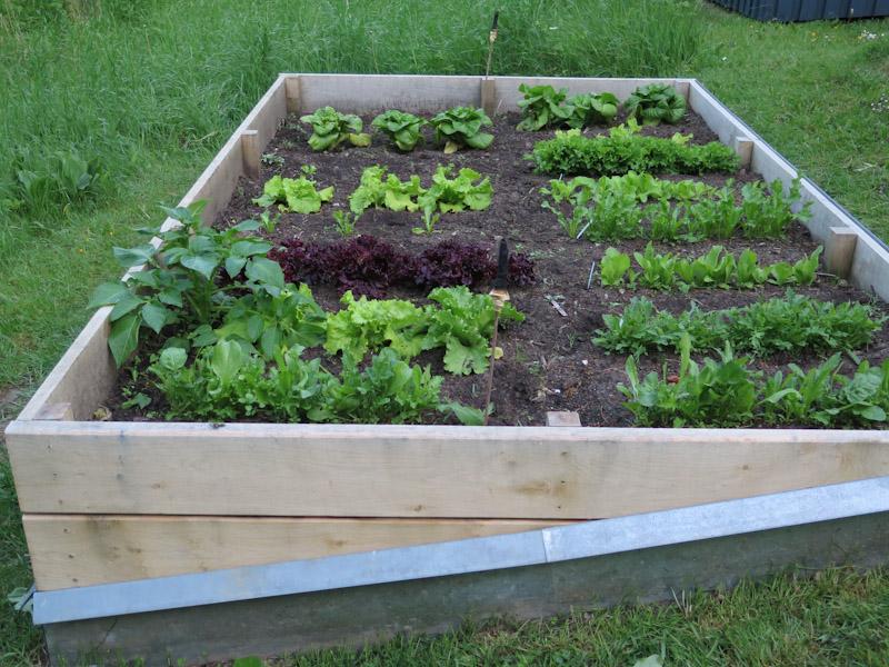 Salatbed-8