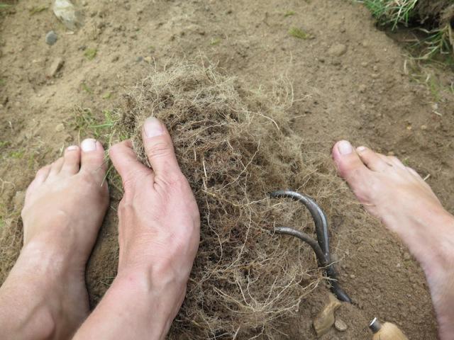 Hestemynte – Helt hen i haven
