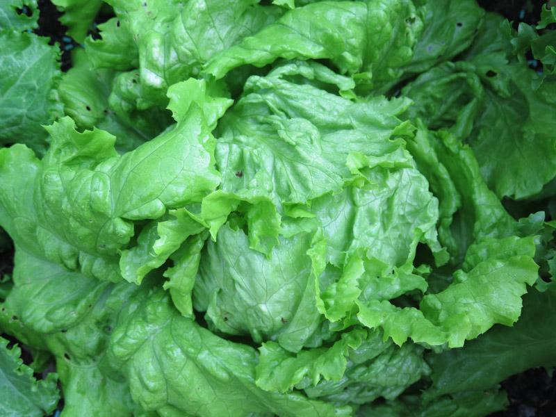 Salatbed1507-1