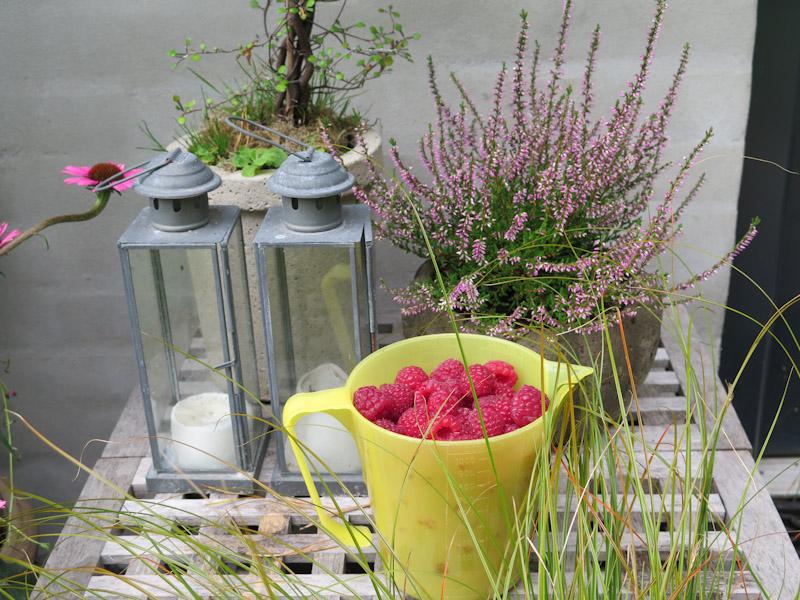 Rubus idaeus-313