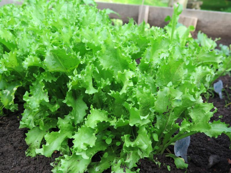 Sneglefrit salatbed-28