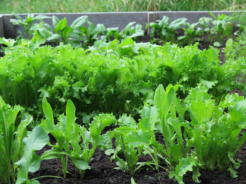 Sneglefrit salatbed-29