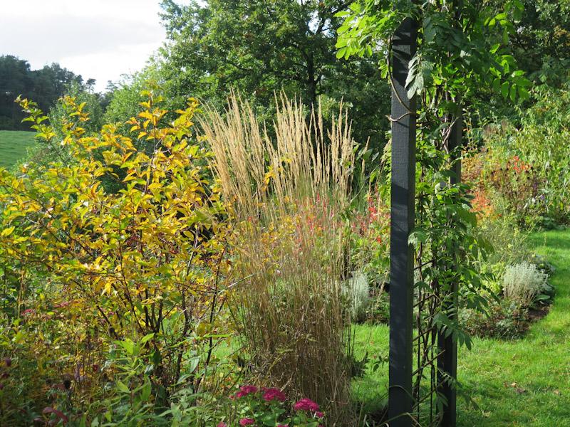 Calamagrostis acutiflora Overdam-6
