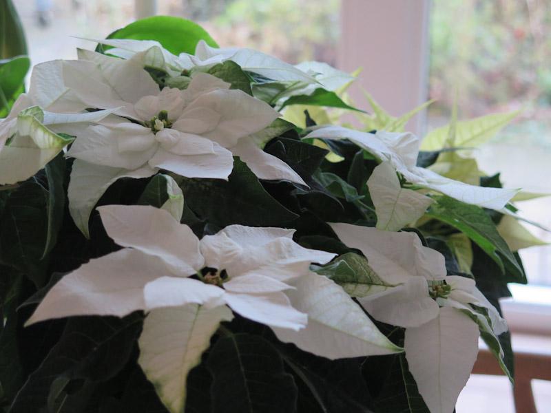 Princettia Pure White-1